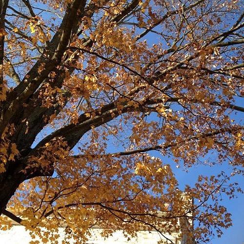 My_tree_at_Shaker_Village_Fall.jpg